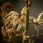 עירית ודבורה- עולם שלם של סימביוזה וסינרגיה מצוי מאחורי הפעילות הרפואית של הצמחים