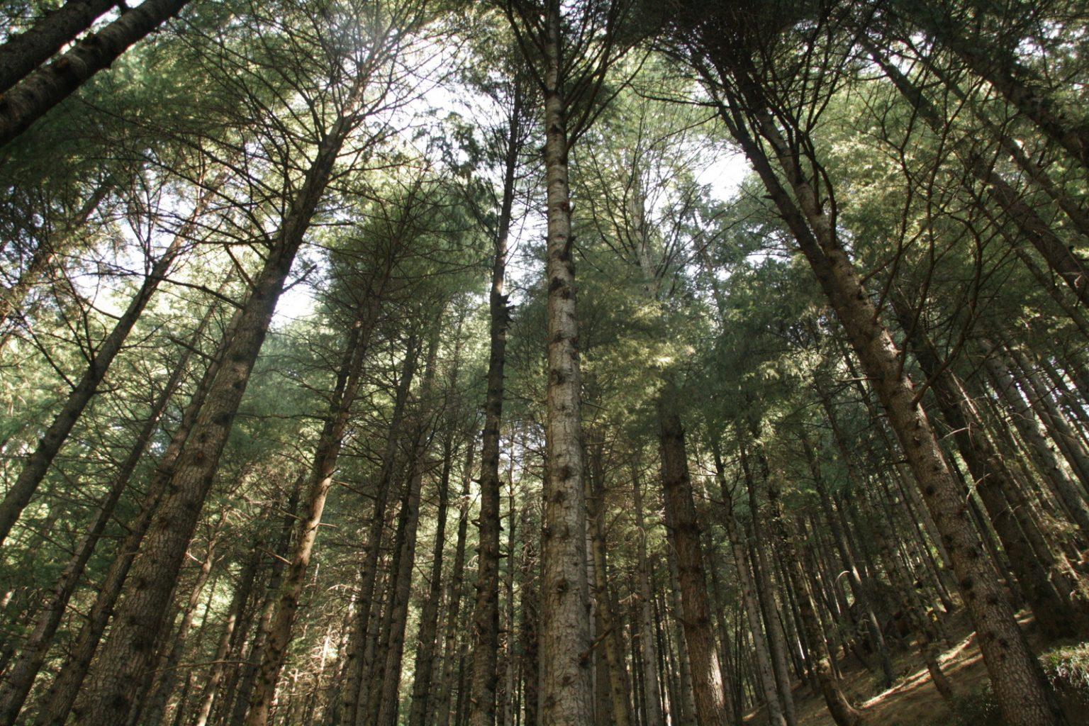 יער- המסתורין והקסם